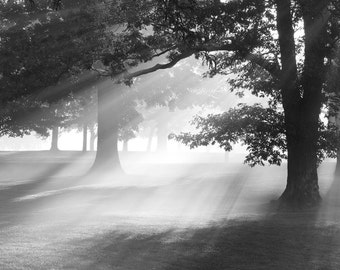 Oak trees art photo print, Misty Oaks fog picture, black and white photography, large paper canvas wall decor 8x10 11x14 16x20 24x36 30x45