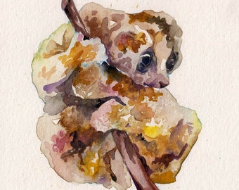 Cute Slow Loris Watercolor Painting by Jen Tracy - Original Art of Wildlife - Warning Totally Not a Sloth