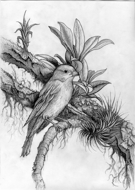 Scribble Pencil Drawings : Dark beautiful hyper realism pencil drawing of a bird
