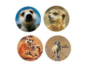 Meerkat  Magnets:  4 Charming Meerkats Looking for a Manor