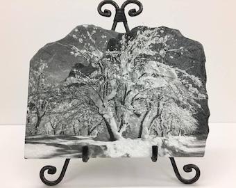 Black & White Snow Covered Tree Handmade Flagstone
