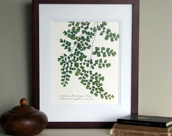 Pressed fern art print, 11x14 double matted, Southern Maidenhair fern, wall decor no. 0073