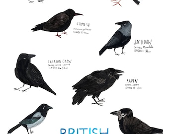 A3 Corvids Birds Poster