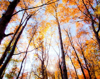 The Divinity of Trees Photo Mystical Tree Photography Spiritual Home Decor Tree Wall Art Colorful Bright Orange Fall Colors Skyward Dreamy