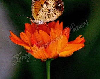 Butterfly on Flower Photograph Matted & Signed