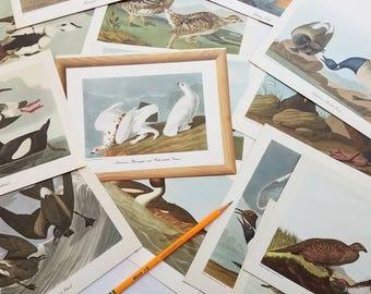 "15 unframed Audubon prints. 8""x 6"". Cut from 1950s Roche Drug calendar. Cardstock weight. Ornithology. Birders. Collage. Bird craft."