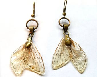 Small Cicada Wing Earrings
