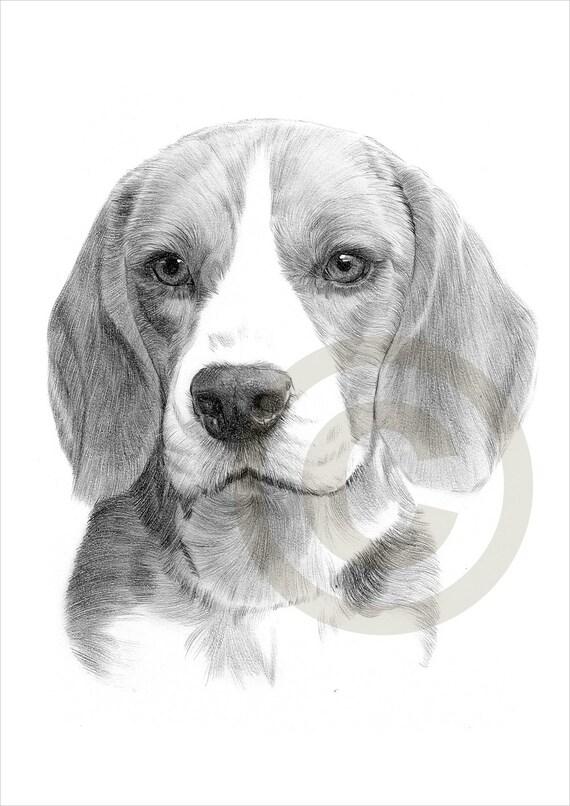 Hnliche artikel wie hund beagle bleistiftzeichnung - Dessin tete de chien ...