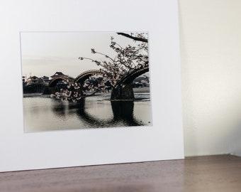 A Cherry Blossom Branch Kintai Bridge background, Iwakuni, Japan