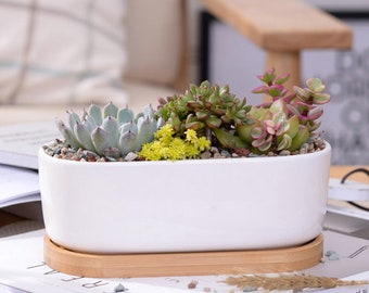 White Ceramic Succulent Planter