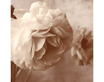 Floral Print Art, Ranunculus Print Wall Art, Sepia Flower Photography