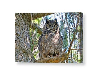 Owl Canvas, Great Horned Owl, Owl Wall Art, Owl Decor, Raptor Art, Wildlife Canvas, Wrapped Canvas, Wild Owl, Owl Photograph