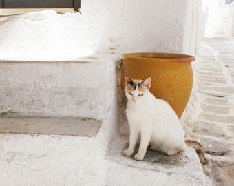 "Cat Photography  - white gold wall art - Greece photography - cat wall art print   ""Cat and Gold Pot"""