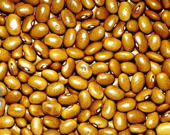 Yellow Indian Woman Bean Seeds Non GMO Open Pollinated Swedish Heirloom Gardening