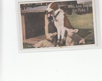 With Love From The Kids-Brown Border Collie And Lambs Antique Postcard