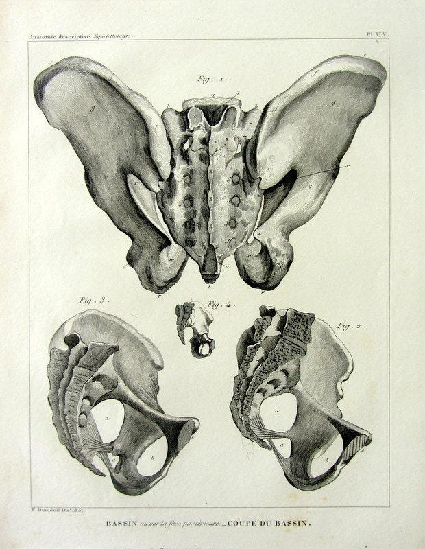 1831 Curiuos Jahrgang Knochen Anatomie Gravur Druck das