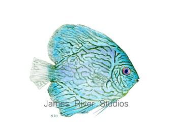 Blue Tropical Fish Art Tropical Fish Painting Blue Fish Print. Fish Watercolor Painting Blue Coastal Living Art Modern Beach Home Art Print