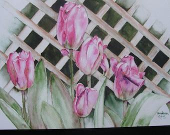 6 X 9 Pink Tulips Print