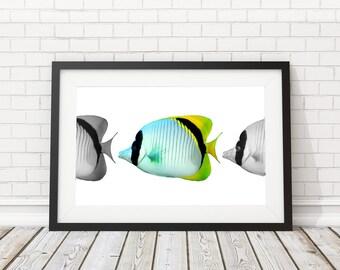 Fish wall art, Fish Poster, Fish Printable, Nautical Print, Fish Print, Nautical Decor, Coastal art, Beach Poster, Fishing gift, Beach decor