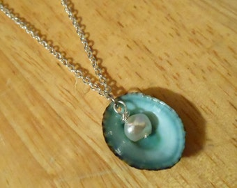 Seashell Necklace - Limpet Seashell Necklace - Green Seashell Necklace - Seashell pendant