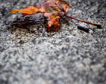 Autumn Orange Fall Leaf - Photography --  8x12