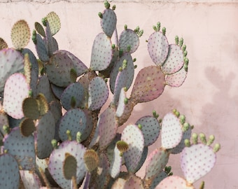 Plants on Pink: Prickly Pear Cactus Desert Print