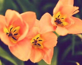 Orange - 4 x 6 Fine Art Photograph