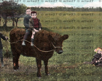 Ride vintage postcard of Rough Riders, boys on a cow to direct digital download 2 files