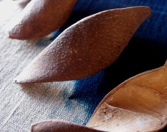 Dried Pods-  Curve Pods - Potpourri Supplies - Naturals -  2 quarts