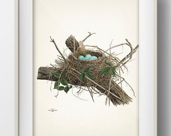 Robin Bird Nest - NE-01 - Rustic woodland fine art print of a vintage natural history antique illustration