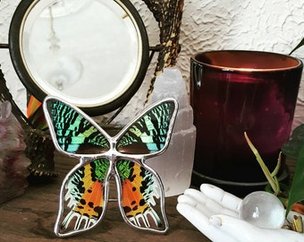 Real Sunset Moth Display. Boho Style Decor. Real Butterfly Display. Tabletop Display.  Butterfly Shadowbox Display. Real butterfly frame.