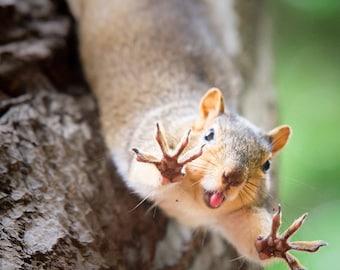 Squirrel Jazz Hands Photo