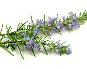 Rosemary 100 % Pure Essential Oil