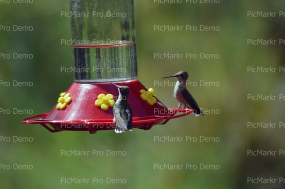 Hummingbird - Edible Cake and Cupcake Topper For Birthday's and Parties! - D21466