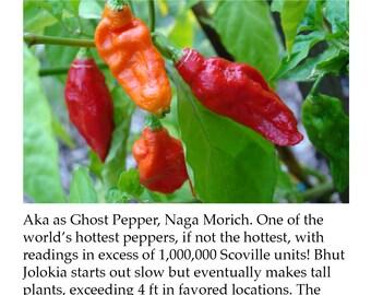 Ghost Bhut Jolokia Pepper Plant Tag Heirloom Hot Super Hot Sweet Hybrid Pepper Picture Garden Marker
