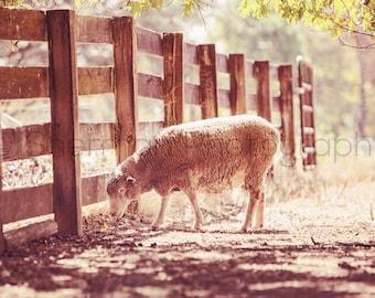Farm Photography - Autumn Decor- Sheep Photo - Lamb Photography - Rustic photography - Nursery Decor - Baby Room Photography - Art Print