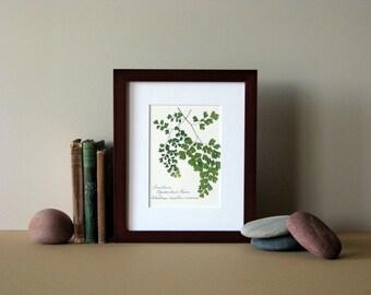 "Pressed fern print, 8"" x 10"" matted, Southern Maidenhair fern, woodland botanical, no. 026"