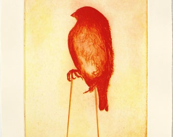 Two plate photo etching by Catherine Cartwright. House Sparrow Phoenix.