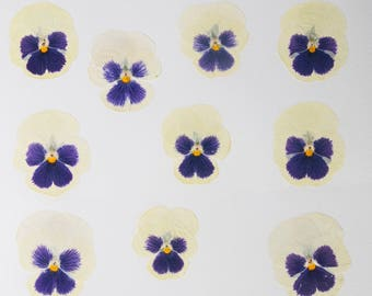 10 Dried Violas  Dry white pansy Craft Supplies Wedding Decorations Real flowers Embelishments Pansy Viola Wedding Decor, Viola