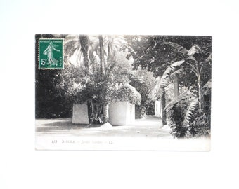Garden tropical garden Algeria Landon Biskra-old postcard - antique french Lenhert Landrock - Botanical Garden North Africa