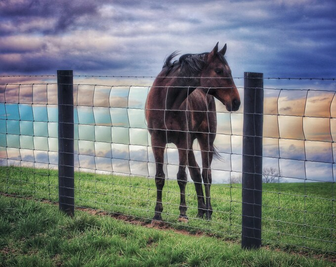 Photography, Horse Photography, Farm Scene, Title: High Plains Horse of Fleming County