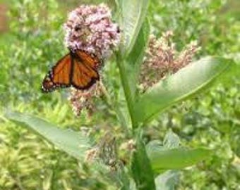 WF)~MILKWEED~Seed!!!~~~~Please Promote Monarch Habitat!!