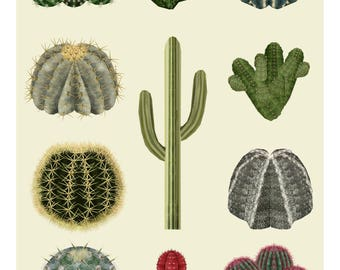 Cactus Print, Cactus Illustration, Cacti, Botanical Illustration, Botanical Print, Cactus Poster, Cactus Drawing, Plant Print,