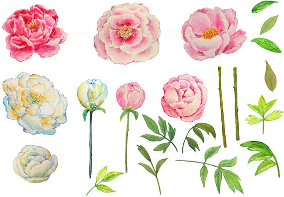 wedding clipart watercolor peony pink and yellow printable rh etsy com peony border clipart peony border clipart