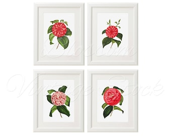Red Camellia Print, Botanical Print Flowers, Original vintage botanical print set of 4, Red Camellias, Wall decor lot, flowers lot 2373