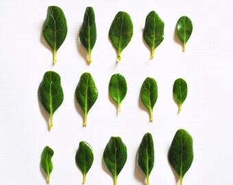 Leaf Collection Digital Print