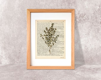 Thyme herb dictionary print-Thyme Kitchen wall art-Thyme on book page-herbs and spices print-Thyme Herb Print-by NATURA PICTA-DP036