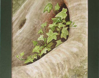 Watercolor Plein Air Painting Nature Still Life Niche of Ivy