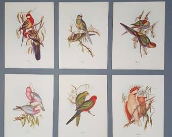 Set of 6 prints, J Gould 1960s beautiful bird prints