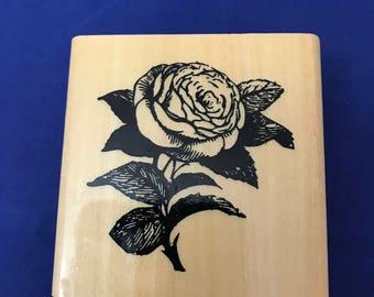 Rose, Blossom, Anita's, Bloom, Petals